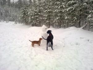 Snögubben som husse byggde för några dagar sedan måste undersökas ordentligt!