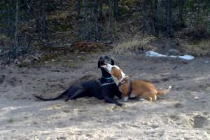 Indy och Mandy lekte som tokar i solen under helgen.